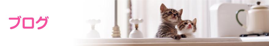 猫のエーラス・ダンロス症候群(皮膚無力症)