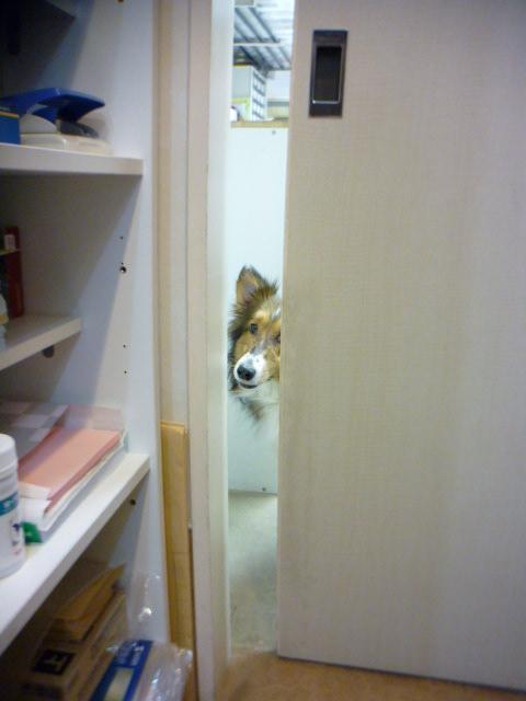 扉が開いてるよ